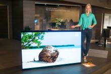 Компания Sony показала свой самый большой BRAVIA OLED на выставке IFA2017