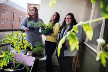 Stena Fastigheter inleder projekt för ökad biologisk mångfald