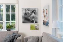 Kuvavalmistaja ifolor: Tämä näkyy myös kuvissa – lemmikkejä on Suomessa jo enemmän kuin lapsia