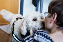 Djur inom vård, skola och omsorg