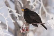 Lär känna fåglarna inpå knuten med Lärkvitter