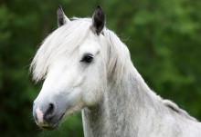 Sveland höjer hästarnas ersättningsnivå