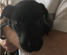 Officers recover suspected stolen puppy from address in Kirkby