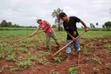 Debatt: Hållbart jordbruk kan bromsa massutrotningen av arter