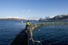 Clarion Hotel Sign är stolta över sitt hållbarhetsfokus med ASC-certifierad fisk och skaldjur
