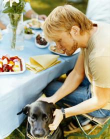 Kolme neljästä koiran omistajasta pitää eläinlääkärimaksuja liian korkeina