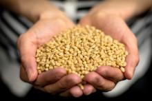 Nordiska Projekt - Biokompositgranulat – produktion startad i Hylte bruk