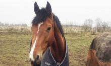 Vägen mot att bli tävlingshäst har börjat på riktigt