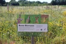 """Kooperationsprojekt """"Bunte Biomasse"""" zieht positive Jahresbilanz 2019"""