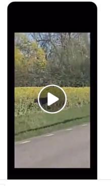 Vargen som rör sig i Skåne har blivit identifierad