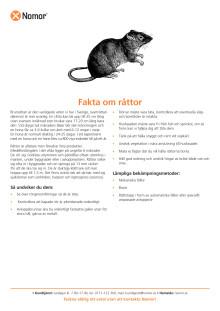 Fakta om råttor
