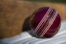 Update on cricket spectator pilots