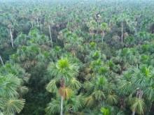 Flest palmer i de amerikanska regnskogarna