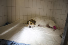 Terriern Rocky överlevde ormbettet