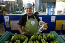 Rekordbelopp till Fairtrade-odlare från svenska konsumenter