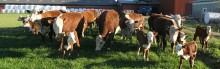 Tuffa utmaningar och vägar till framtidens mjölkproduktion!