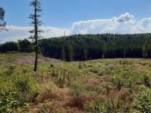 Gothaer bAV: Selfservice nutzen, Bäume pflanzen