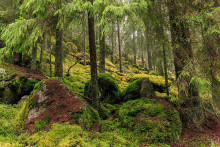 Scents reveal which forests are of high biodiversity value and need protection