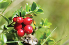 Naturally improved health and well-being with Nordic superfruit extract