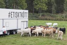 Hälsingestintans färs från gårdsslaktade djur hos Martin & Servera