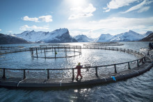 Norwegian seafood exports for October break NOK 8 billion for the first time