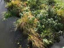 Gör en våtmarkssatsning – sök bidrag hos Naturvårdsverket