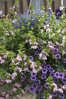 Blommigt och blandat + 2 godbitar