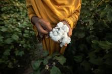 JYSK verpflichtet sich zu nachhaltigerer Baumwolle