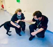 Met's wellbeing dog Dexter continues to raise spirits as he visits more NHS staff