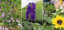 Tag des Gartens am 13. Juni: So werden Garten und Balkon zum Bienenparadies