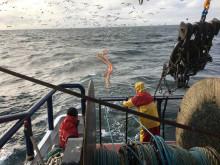 Åtta miljoner till nya projekt för ett mer selektivt fiske