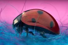 Welke insecten vind je deze zomer bij je thuis?
