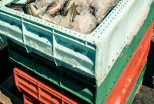 Regler för spårbarhet av fisk införs först under 2017