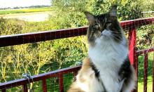 Fästingar, balkongfall, pollen och ormar – här är vårens största faror för katterna
