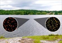 SVU-rapport 2015-06: Molekylärbiologiska metoder för bestämning av barriärverkan vid dricksvattenproduktion ... (dricksvatten)