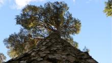 Skogsbruket nyckelspelare i Sveriges klimatarbete