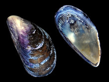 Mikroplast i nordiske farvann