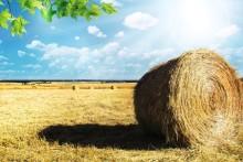Louise Konsumentkoll: Har bönderna försatt sig själva i knipa?