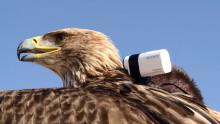 Zeearend Freedom vliegt van Euromast met 4K-ActionCam