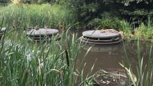 Syrefattigt vatten från dagvattendamm orsakade fiskdöden i Råån
