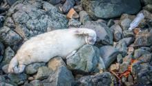 Bluewater warns of dangers to global ocean health of single use water bottles