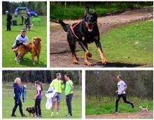 Hundlöpet för första gången i Växjö