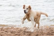 Har din hund fått fukteksem