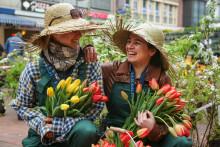 Kiel blüht auf mit Blumenmeer, Ninja Parcour und verkaufsoffenem Sonntag