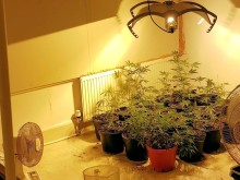 Cannabis plants seized from two Worthing properties