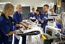 Svårt att jämföra djursjukvårdspriser