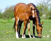 Wenngarn Yearling Sales – hästfest i slottsmiljö