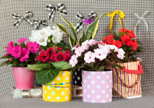 Blomsterfrämjandet intar scenen på Skånska Trädgårdar