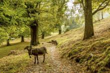 Aktivitäten im Schweizer Herbst wecken die Sinne