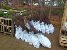 20,000 trees being planted at Woburn Forest